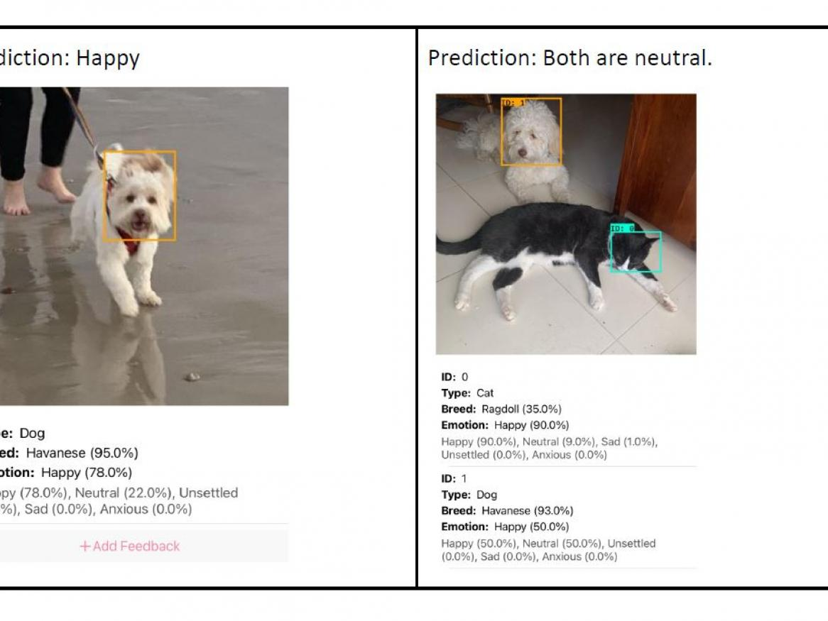 Happy Pets App - images of dog running and cat and dog sitting together