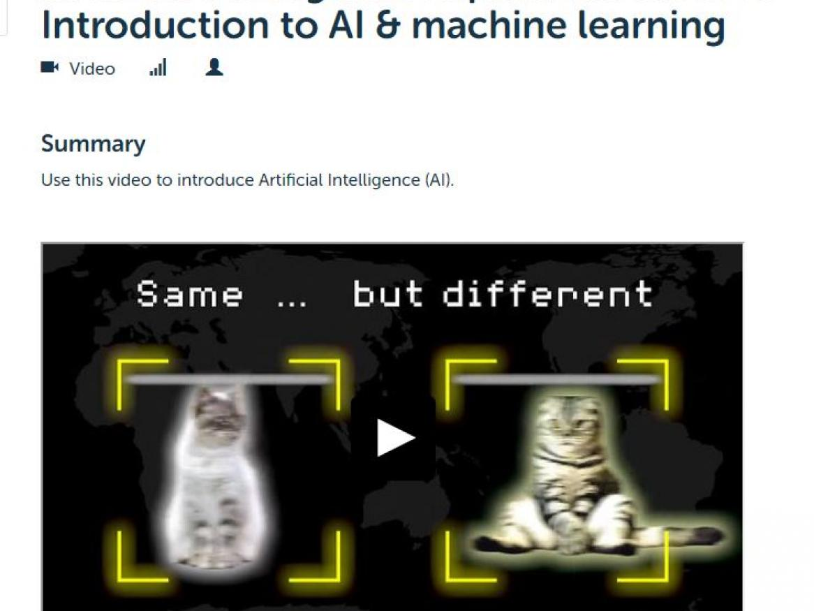 AI ML cat images from DT hub video